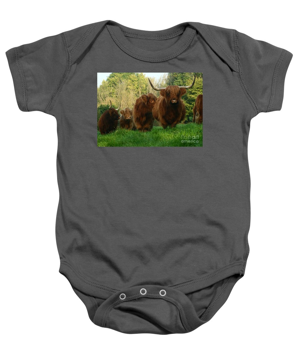 Cow Baby Onesie featuring the photograph Highland Cows by Angel Ciesniarska