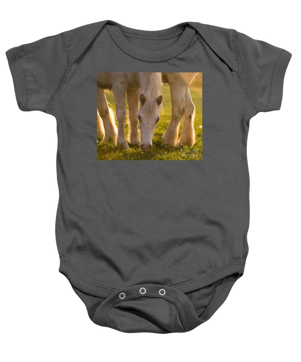 Horse Baby Onesie featuring the photograph In The Golden Light by Angel Ciesniarska