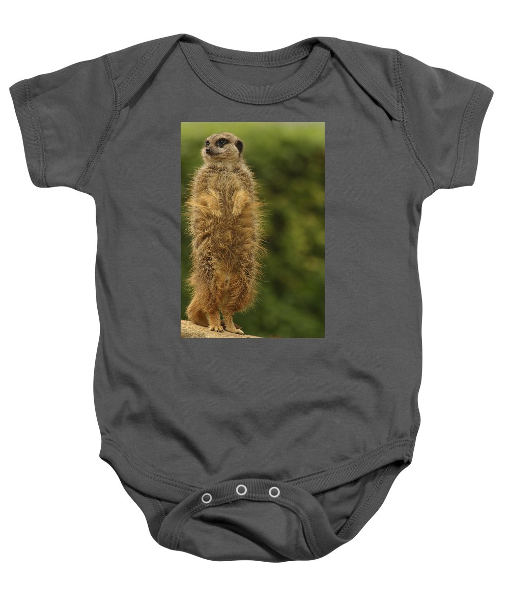 Meercat Baby Onesie featuring the photograph Meercat by Ian Middleton