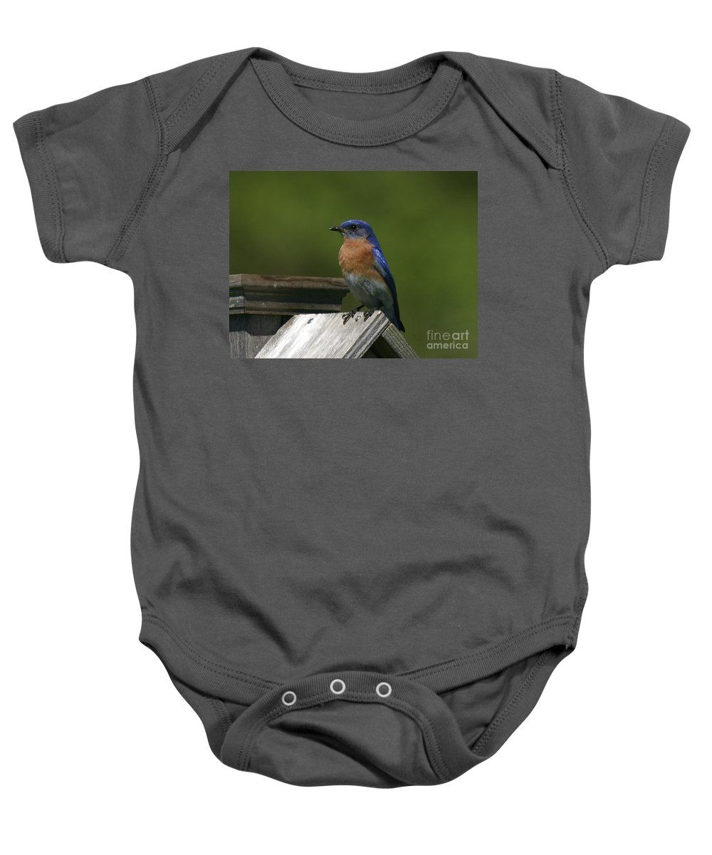 Blue Bird Baby Onesie featuring the photograph Mr Blue Bird by Robert Pearson