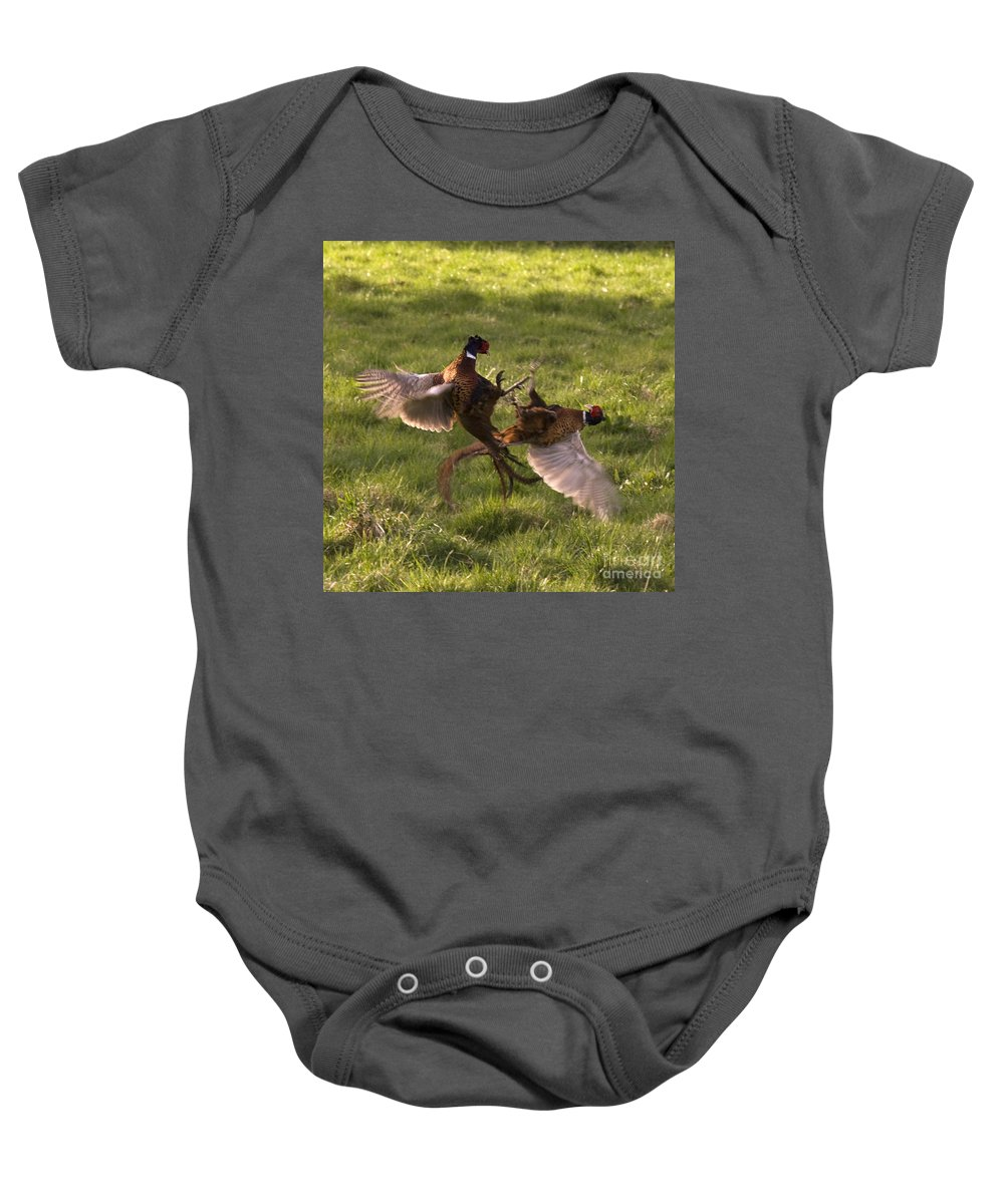 Pheasant Baby Onesie featuring the photograph The Sparring by Angel Ciesniarska