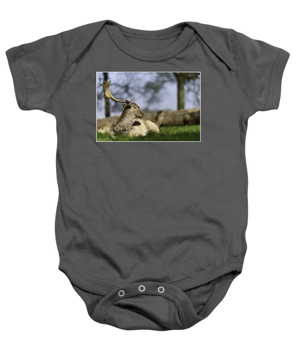 Deer Baby Onesie featuring the photograph Wildlife by Kapil Pal
