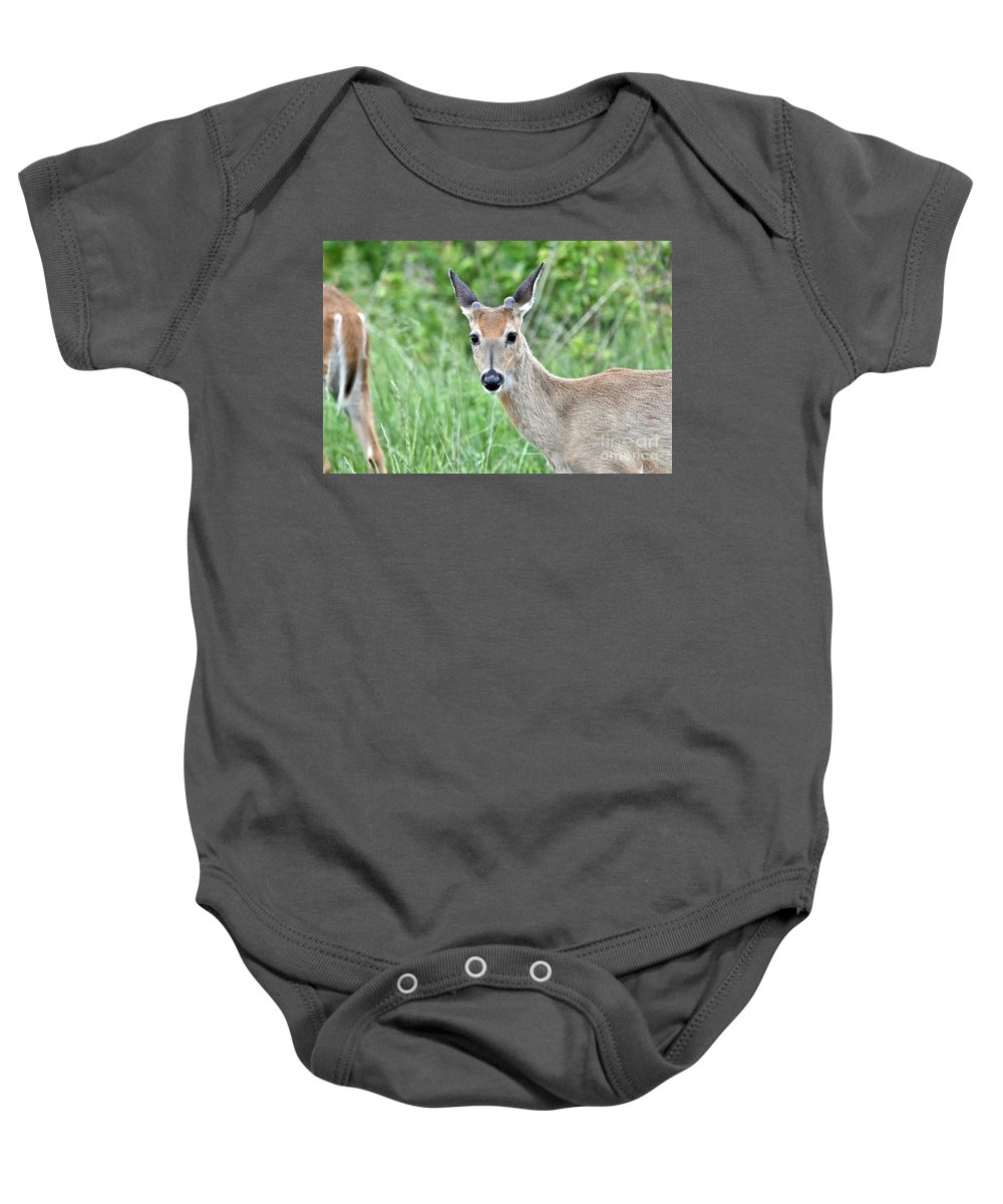 Animal Baby Onesie featuring the photograph Young White-tailed Buck In Velvet by Jeramey Lende