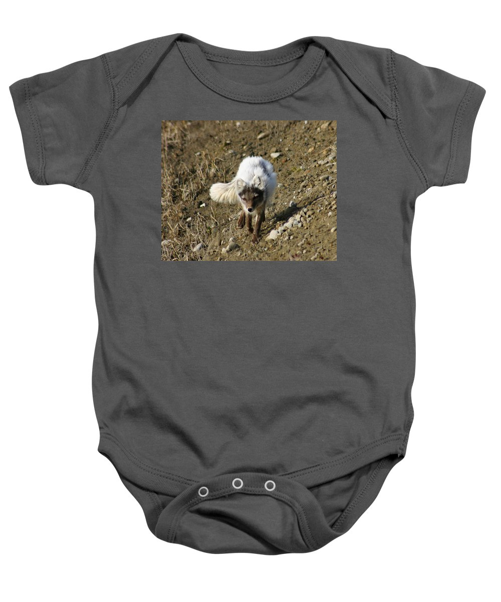 Arctic Fox Baby Onesie featuring the photograph Arctic Fox by Anthony Jones
