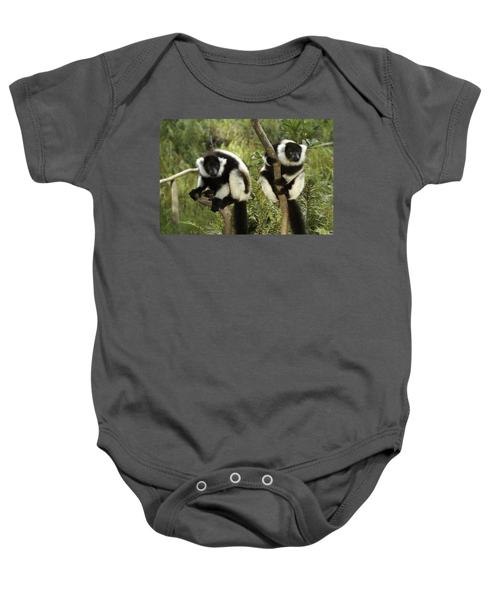 Madagascar Baby Onesie featuring the photograph Black And White Ruffed Lemur by Michele Burgess