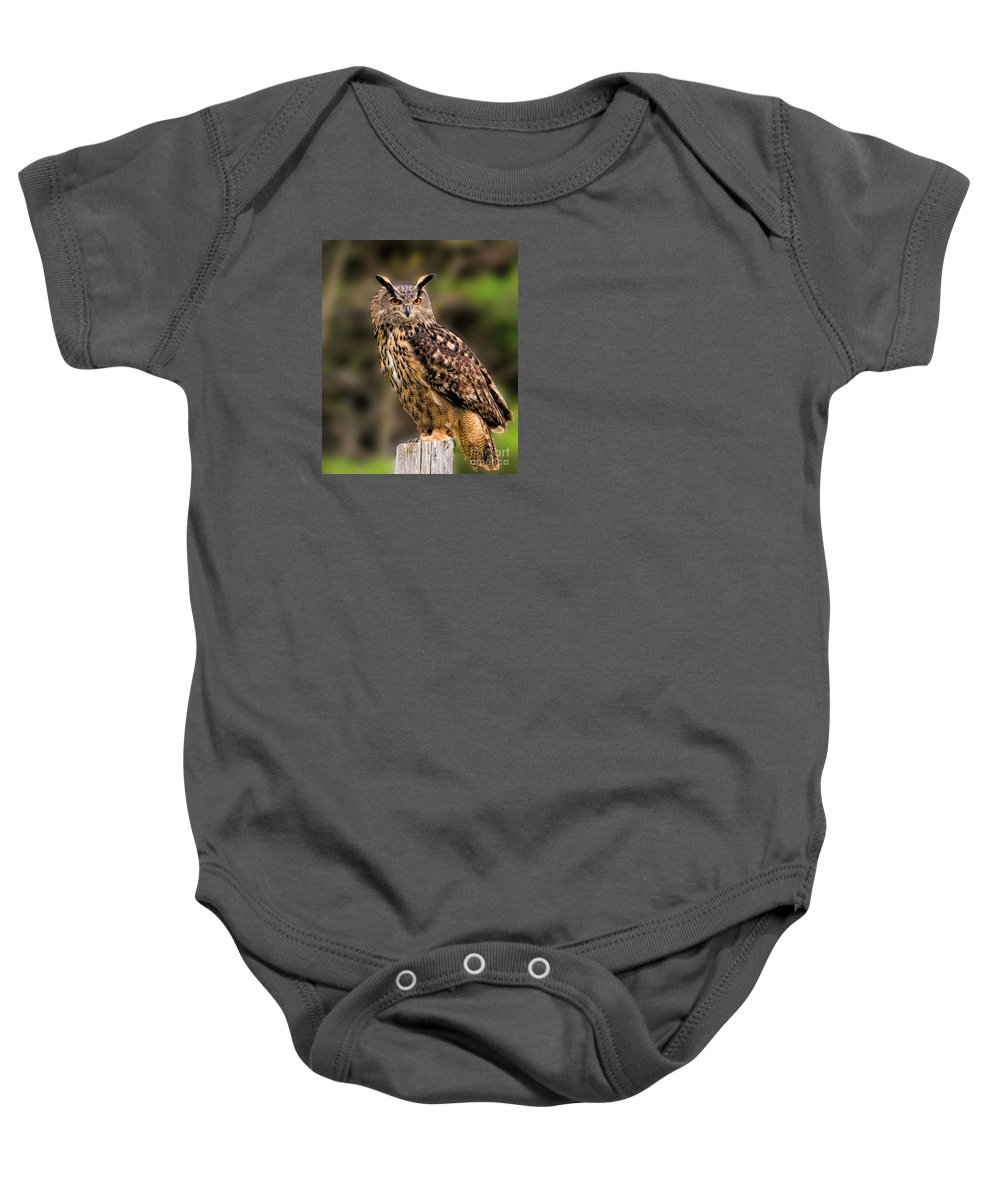 Birds Baby Onesie featuring the photograph Eurasian Eagle Owl by Les Palenik