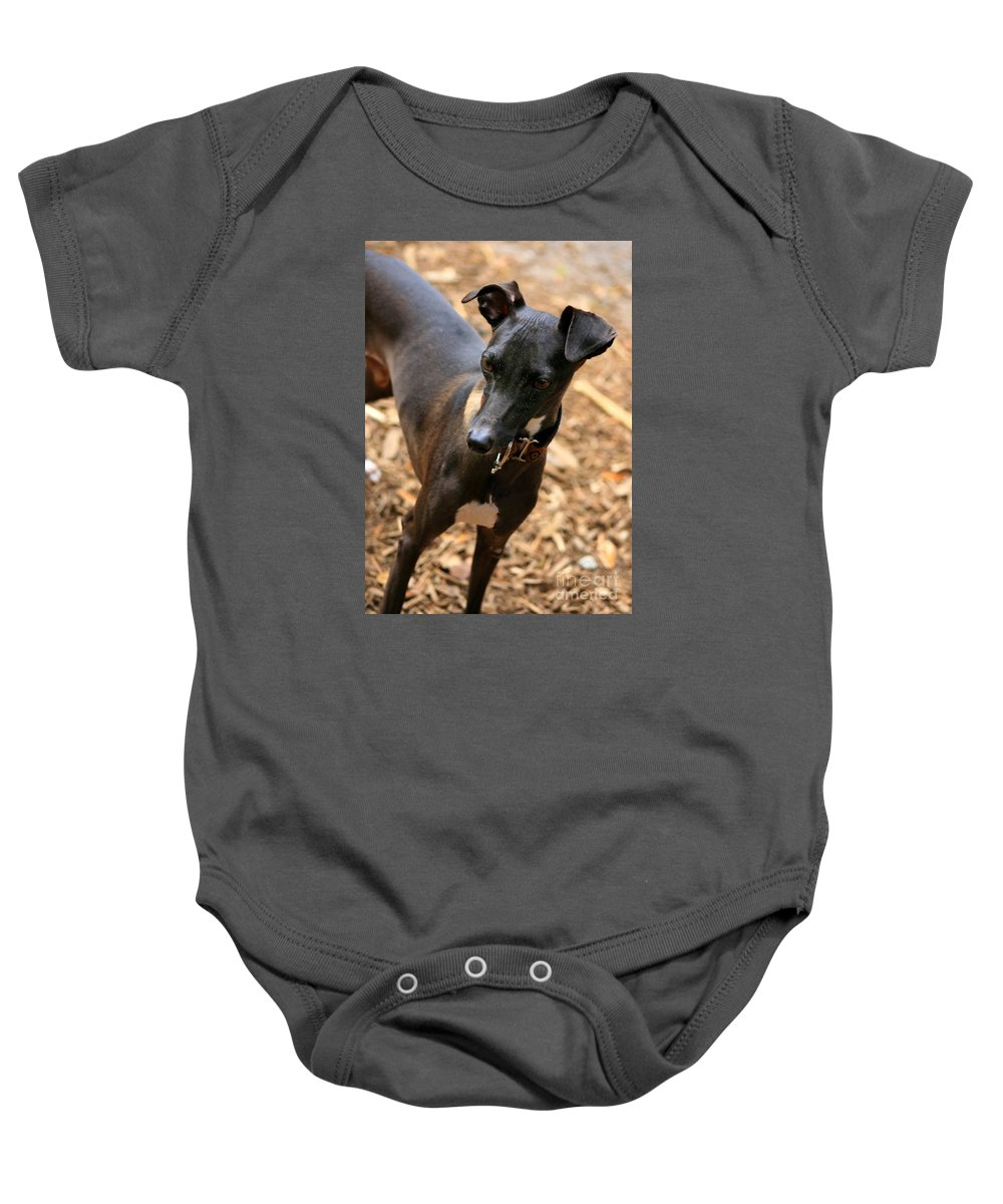 Editorial Baby Onesie featuring the photograph Italian Greyhound by Angela Rath