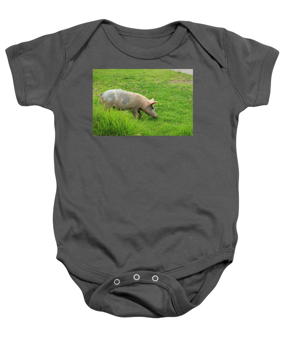 Pig Baby Onesie featuring the photograph Pig In A Pasture by Robert Hamm