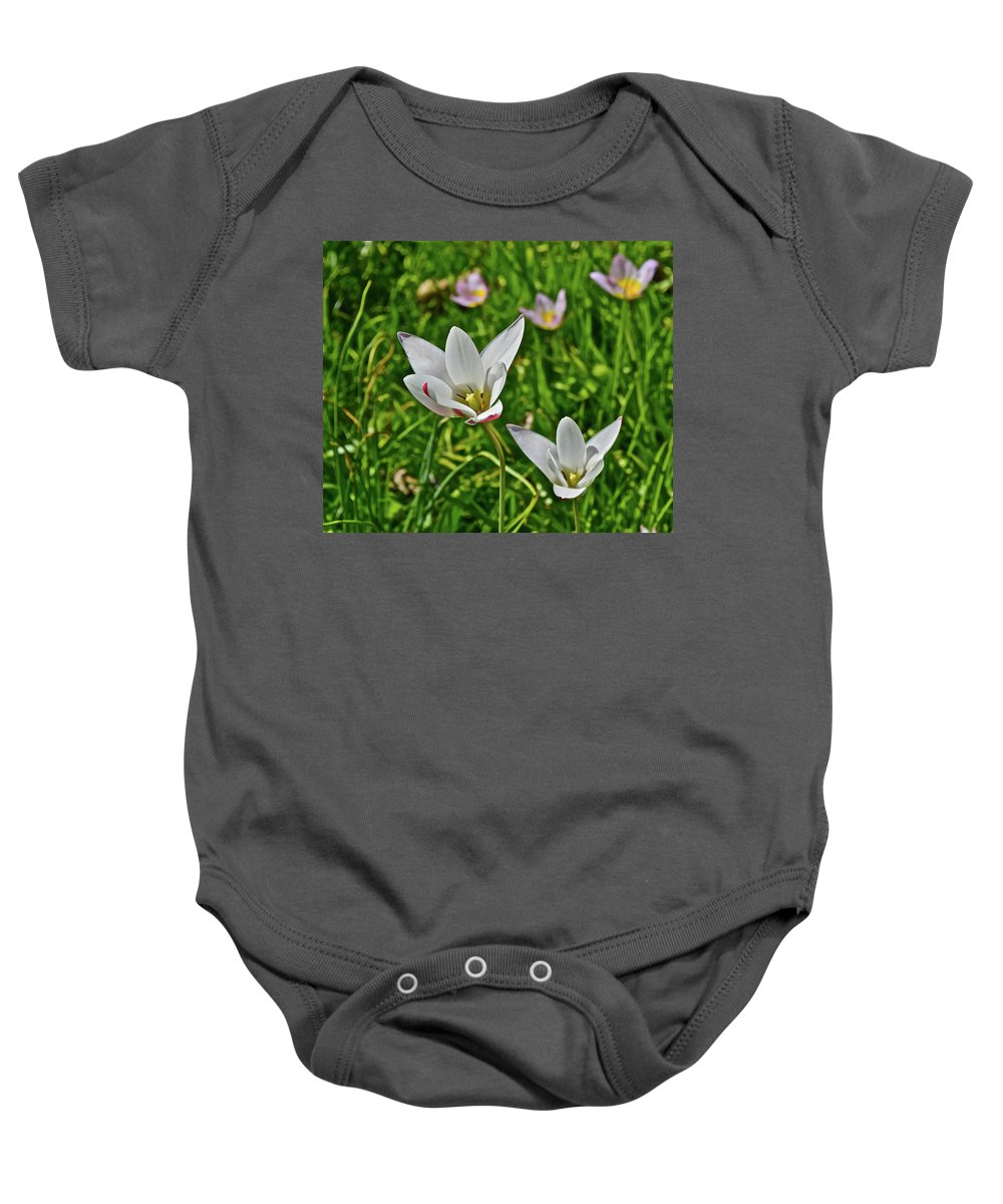 Tulips Baby Onesie featuring the photograph 2016 Early May Meadow Garden Lady Jane Tulip by Janis Nussbaum Senungetuk