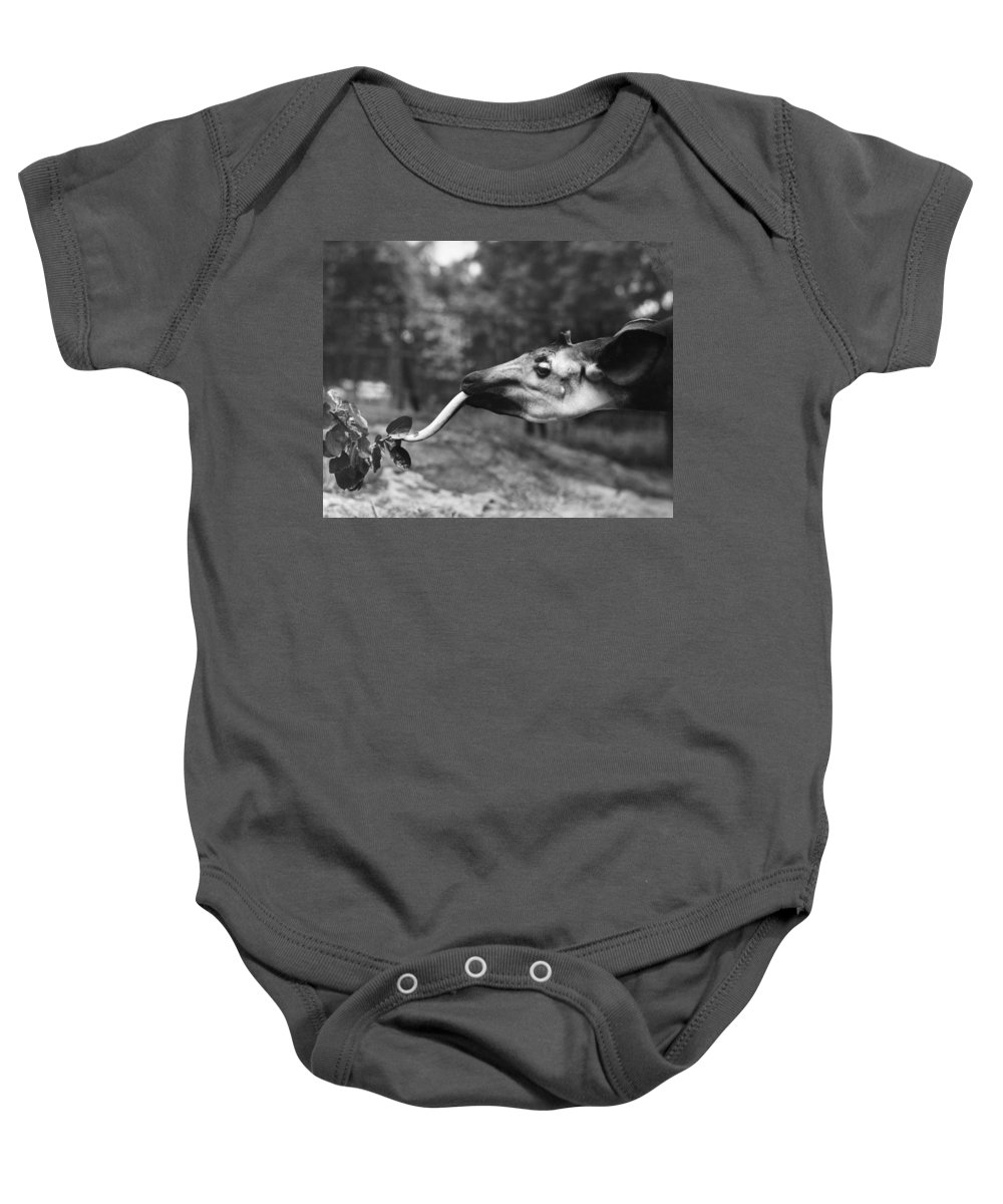 1941 Baby Onesie featuring the photograph Okapi by Granger