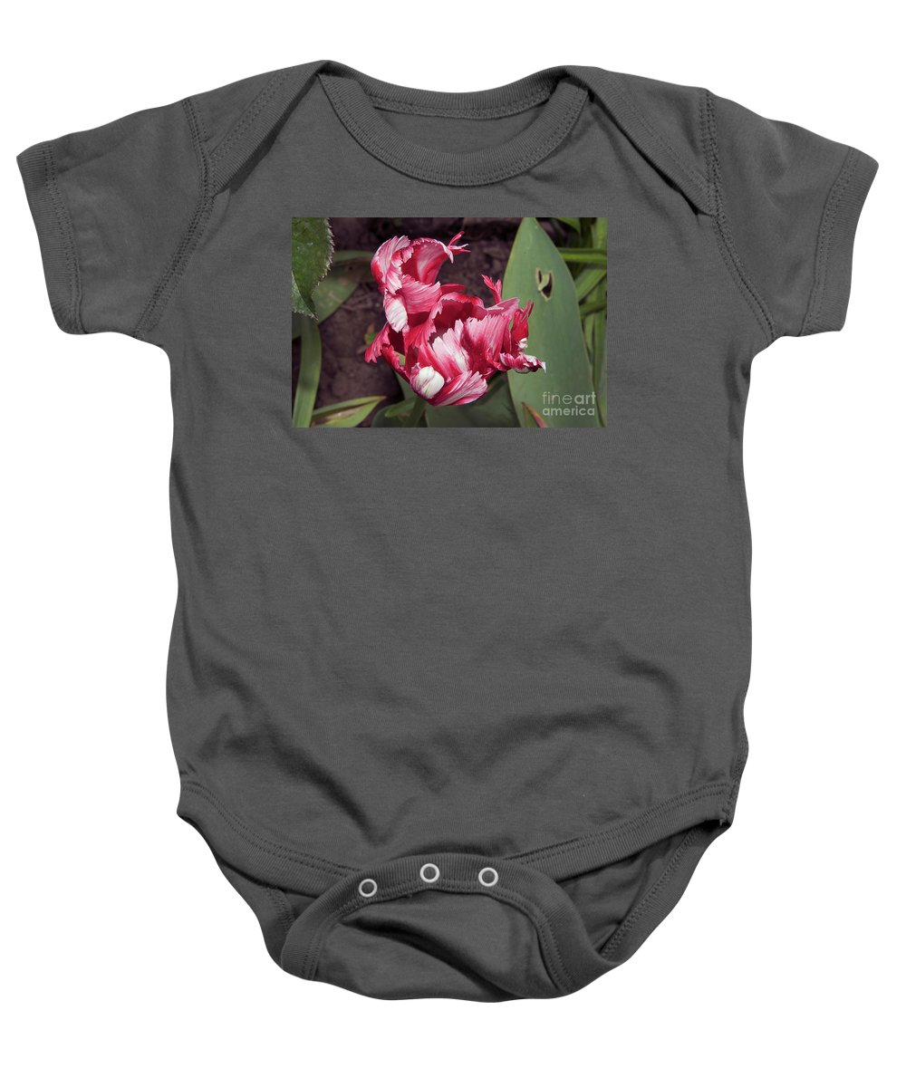 Flowers Baby Onesie featuring the photograph Nice Tulip by Elvira Ladocki