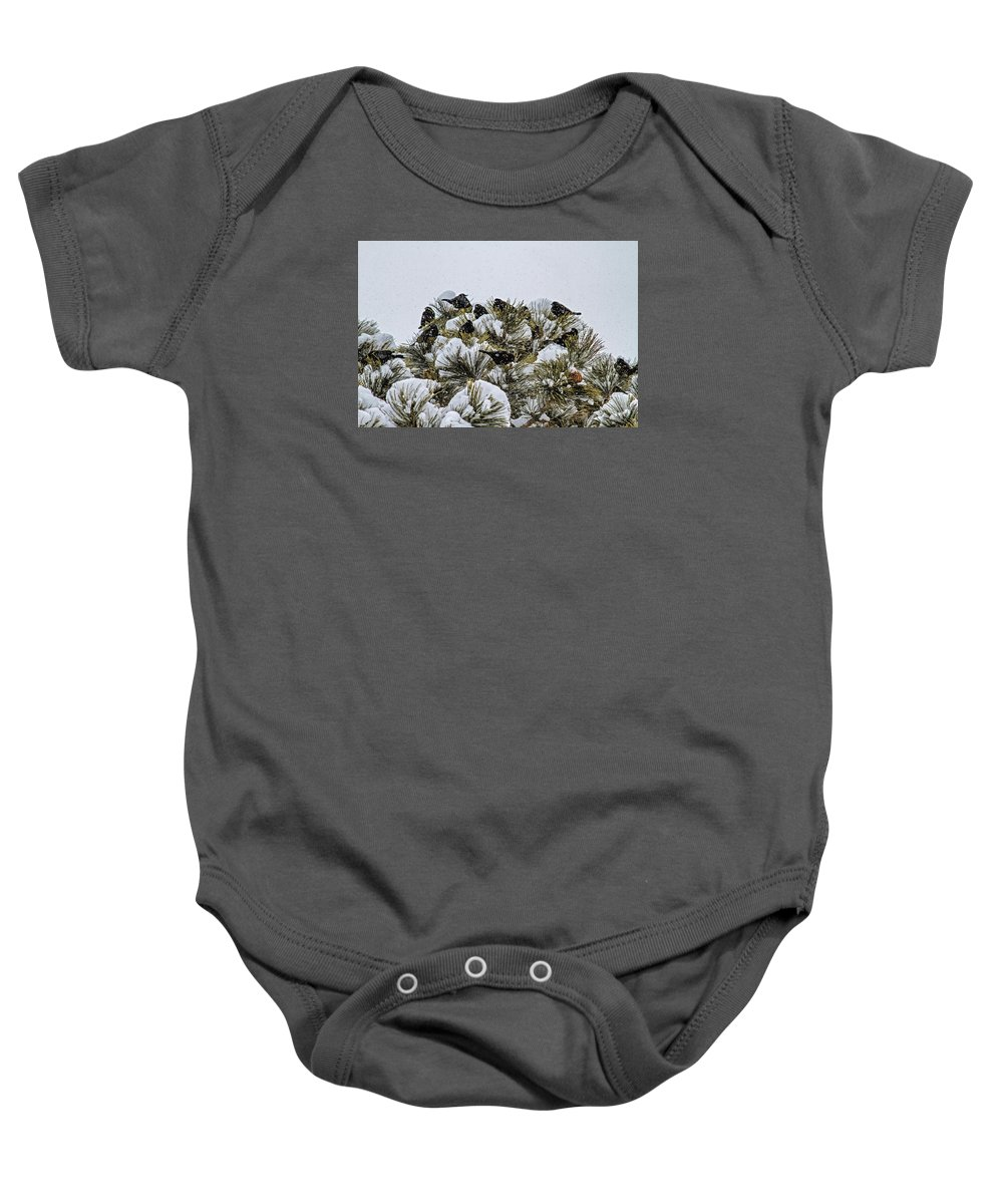 Bird Baby Onesie featuring the photograph 4 And 20 Blackbirds by Alana Thrower
