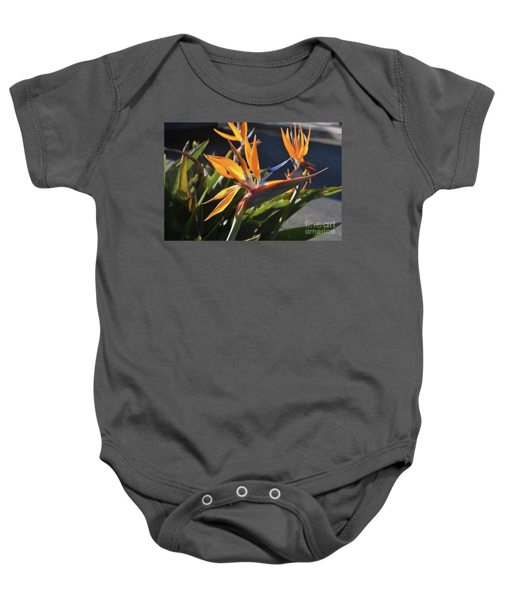 Bird-of-paradise Baby Onesie featuring the photograph A Bunch Of Bird Of Paradise Flowers Bloomed by DejaVu Designs