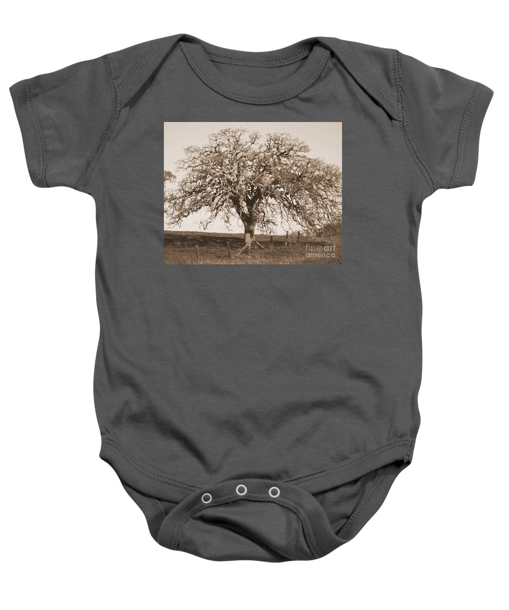 Tree Baby Onesie featuring the photograph Acacia Tree In Sepia by Carol Groenen
