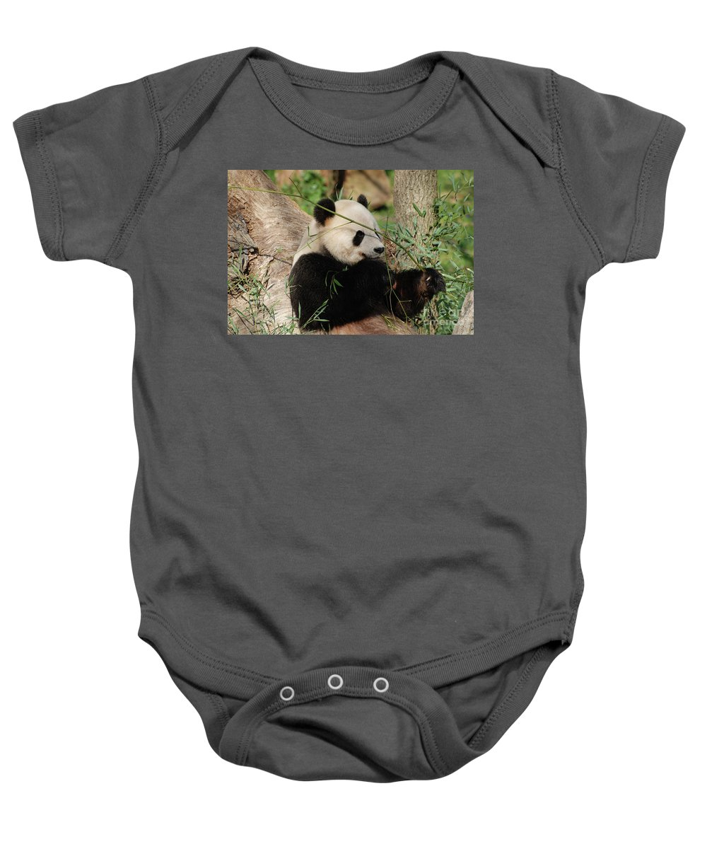 Adorable Giant Panda Bear Eating Bamboo Shoots Onesie For Sale By Dejavu Designs