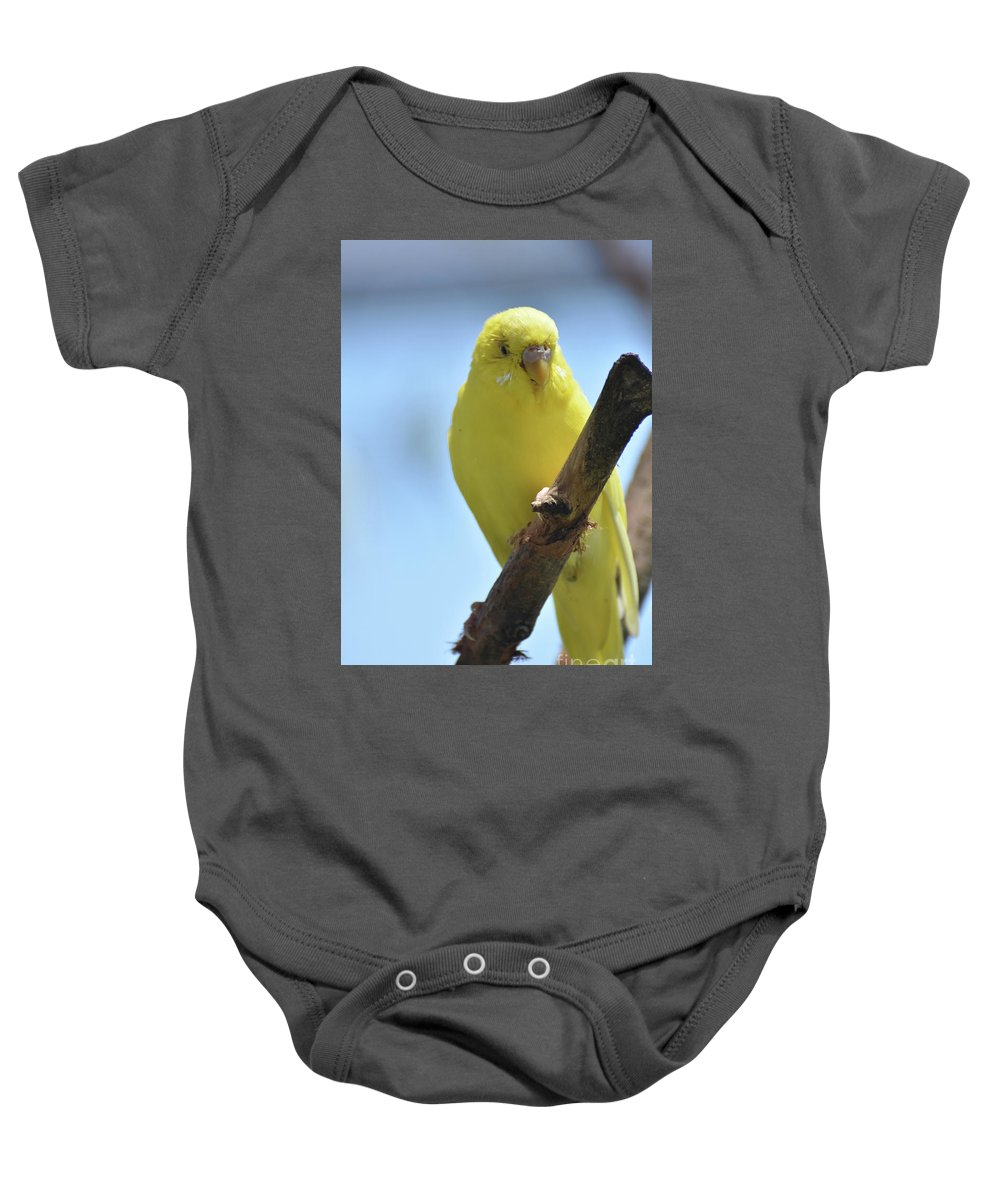 Budgie Baby Onesie featuring the photograph Adorable Yellow Budgie Parakeet Bird Close Up by DejaVu Designs