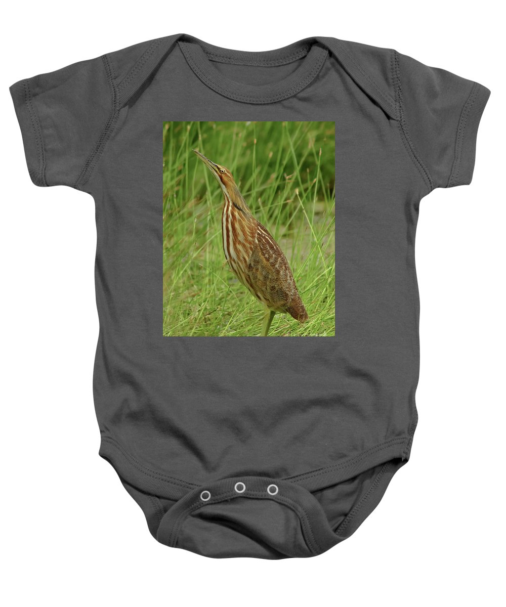 Wildlife Baby Onesie featuring the photograph American Bittern Looking Up by Robert Frederick