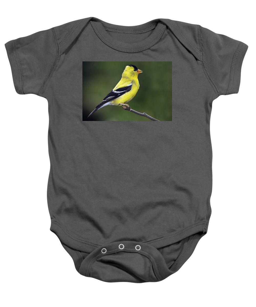 Birds Baby Onesie featuring the photograph American Golden Finch by William Freebilly photography