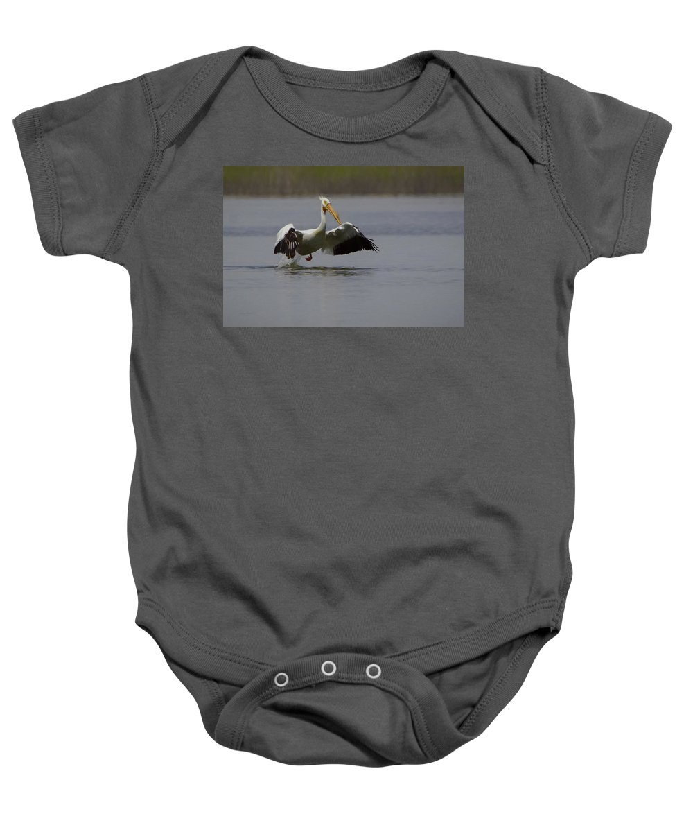 American White Pelican Baby Onesie featuring the digital art American White Pelican Da by Ernie Echols