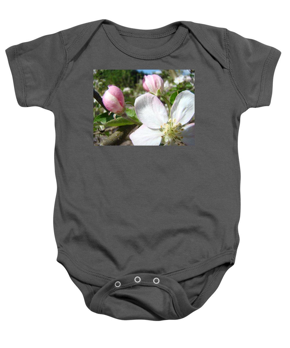 Apple Baby Onesie featuring the photograph Apple Blossom Artwork Spring Apple Tree Baslee Troutman by Baslee Troutman