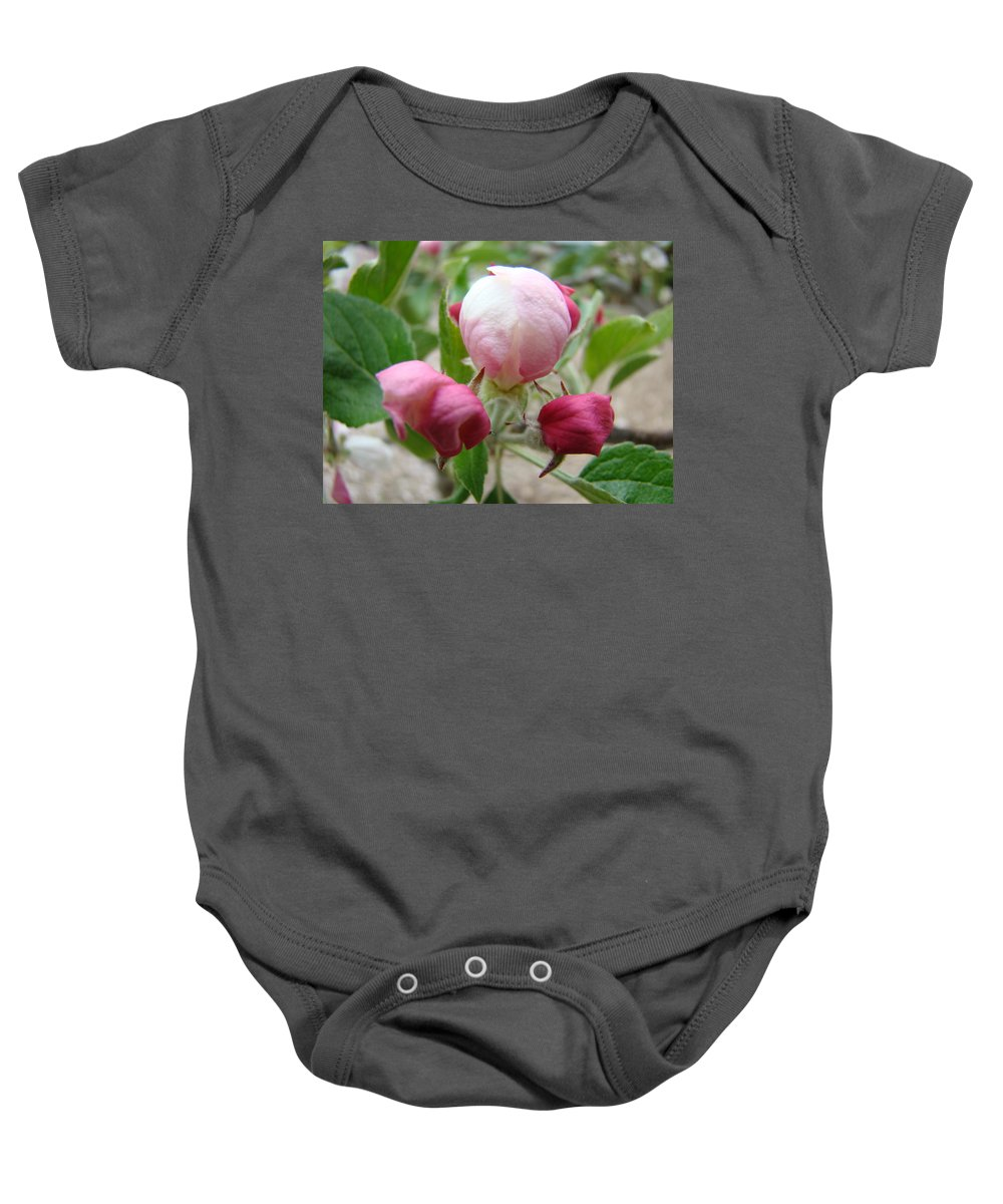Apple Baby Onesie featuring the photograph Apple Blossom Buds Art Prints Spring Baslee Troutman by Baslee Troutman