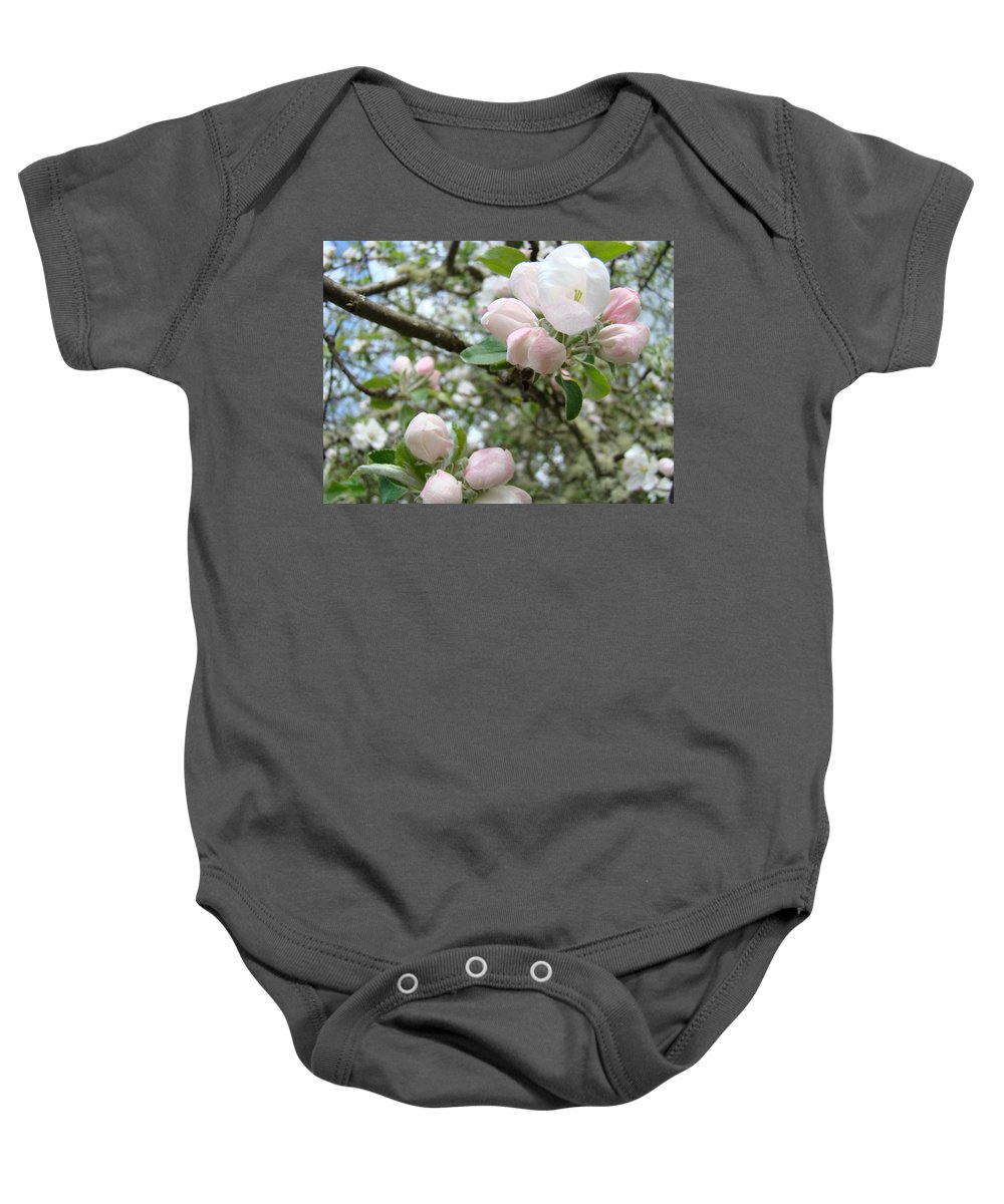 Apple Baby Onesie featuring the photograph Apple Tree Blossoms Art Prints Apple Blossom Buds Baslee Troutman by Baslee Troutman