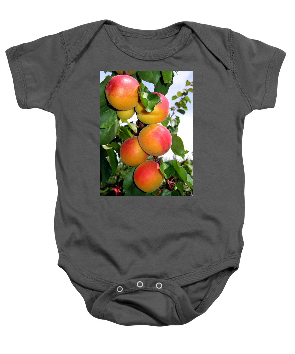 Apricots Baby Onesie featuring the photograph Apricots by Will Borden