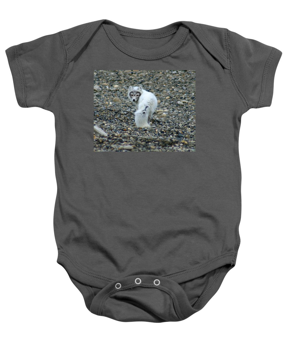 Alaska Baby Onesie featuring the photograph Arctic Fox by Anthony Jones