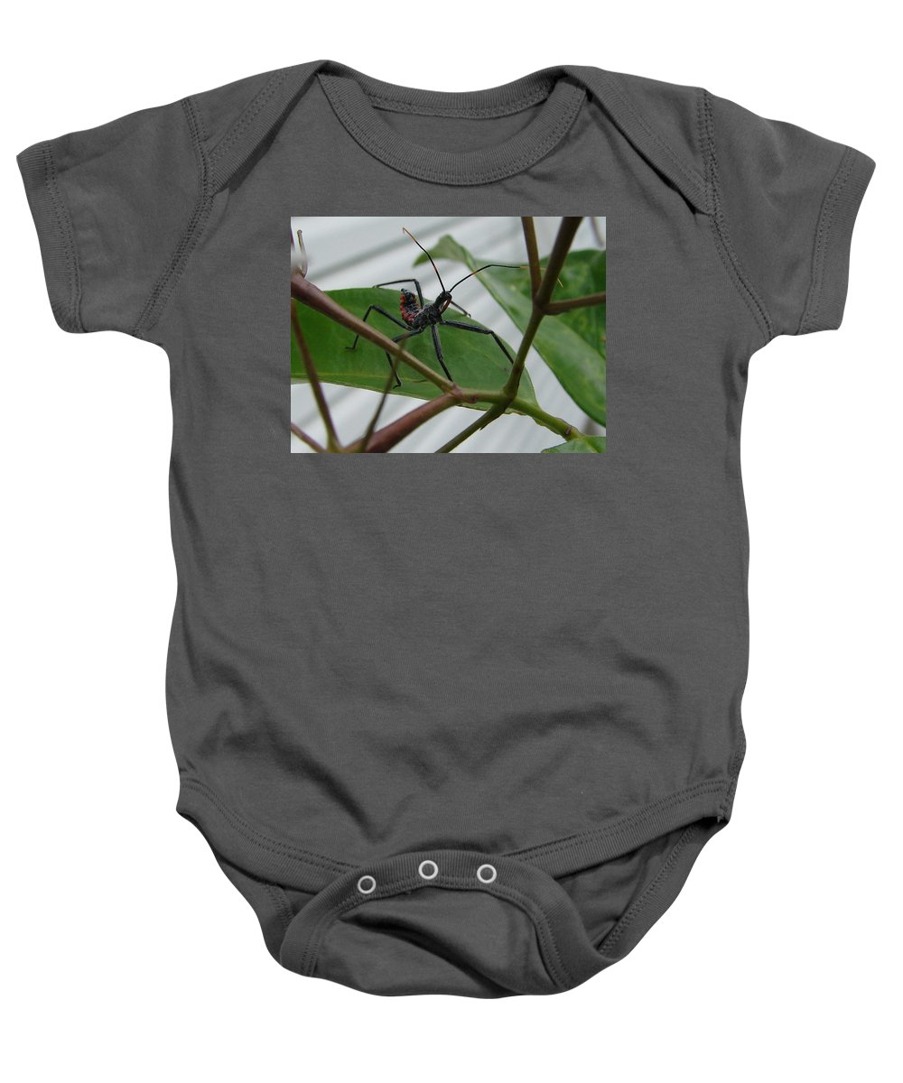 Insect Red Black Green Leaf Baby Onesie featuring the photograph Assassin Bug by Luciana Seymour