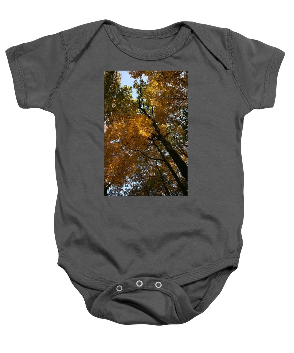 Autumn Fall Trees Orange Landscape Photography Photograph Digital Art Baby Onesie featuring the photograph Autumn Canopy by Shari Jardina