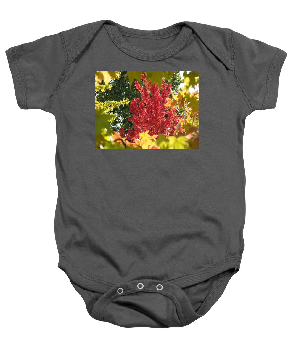Autumn Baby Onesie featuring the photograph Autumn Trees Landscape Art Prints Canvas Fall Leaves Baslee Troutman by Baslee Troutman