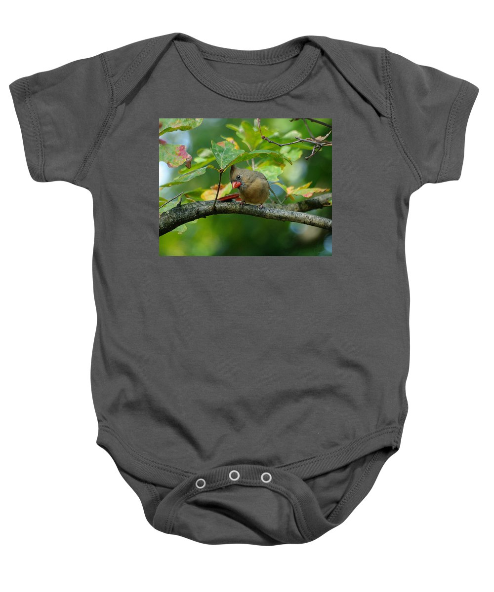 Jenny Gandert Baby Onesie featuring the photograph Available Shelter by Jenny Gandert