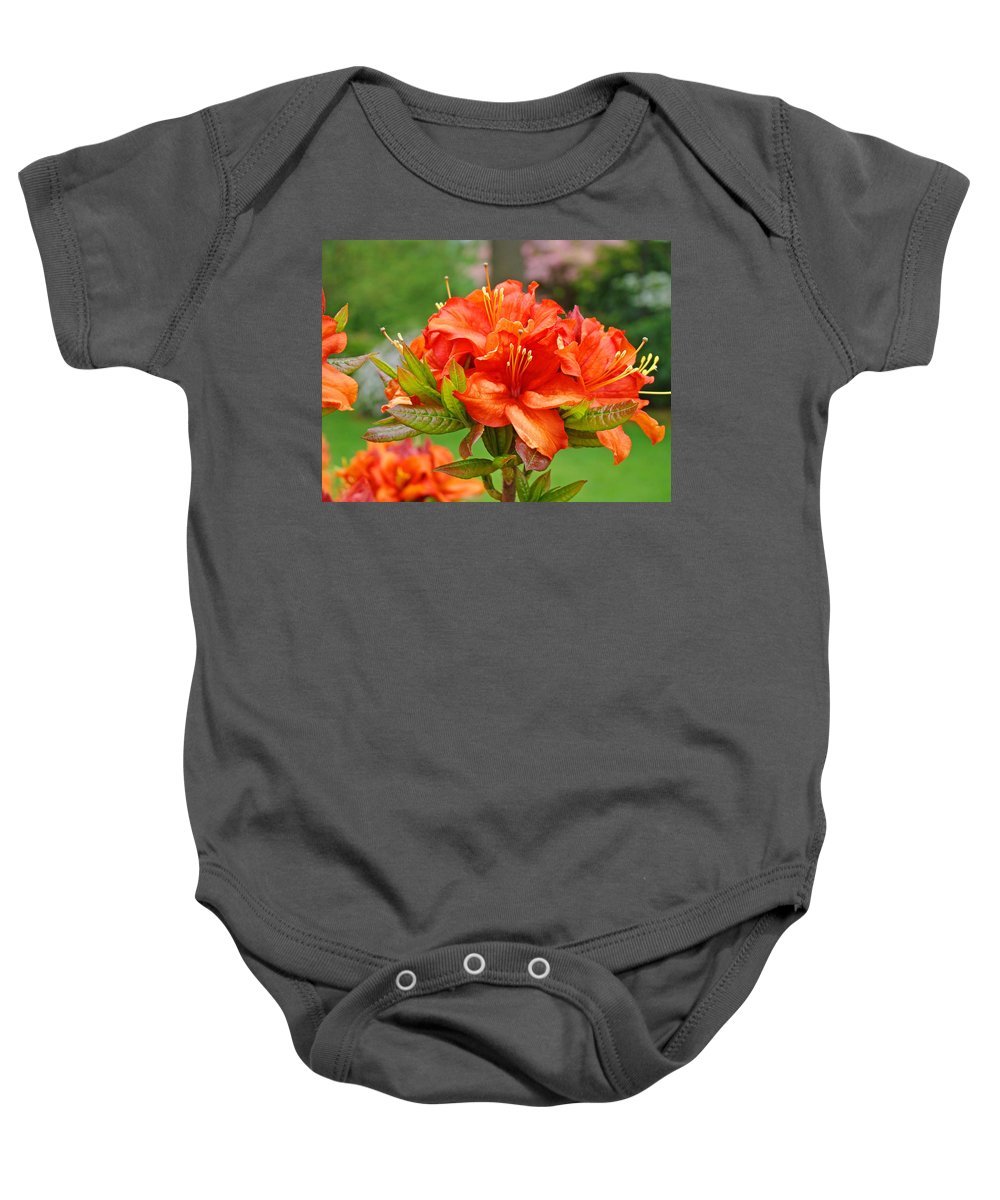�azaleas Artwork� Baby Onesie featuring the photograph Azaleas Art Home Decor 14 Orange Azalea Flowers Art Prints Greeting Cards by Baslee Troutman