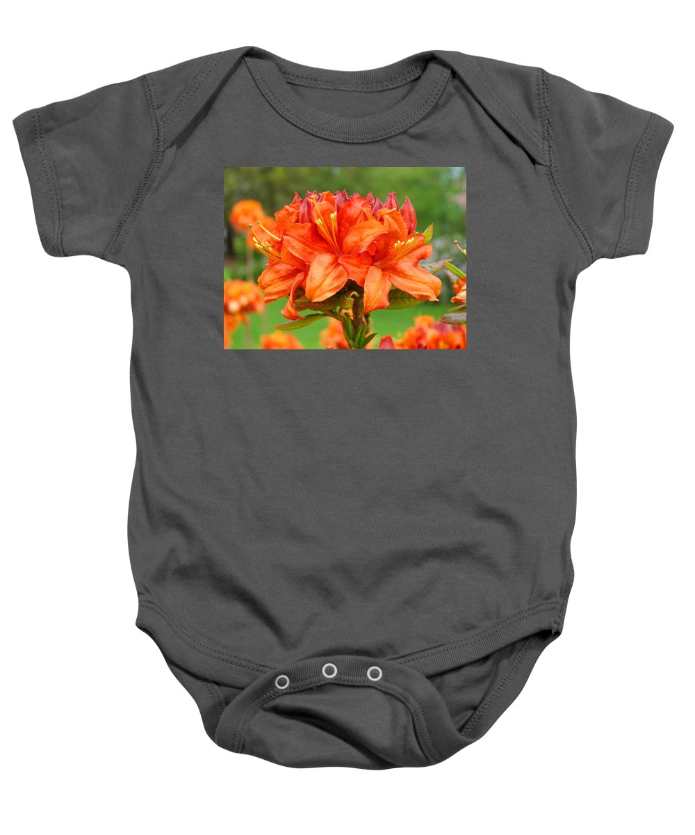 �azaleas Artwork� Baby Onesie featuring the photograph Azaleas Orange Red Azalea Flowers 11 Botanical Giclee Art Baslee Troutman by Baslee Troutman