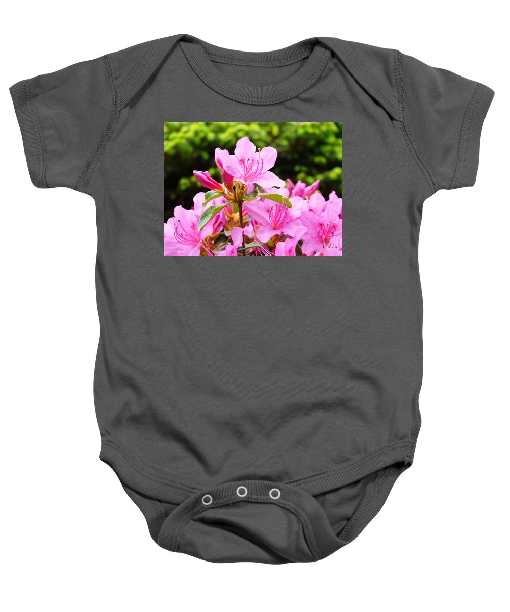 �azaleas Artwork� Baby Onesie featuring the photograph Azaleas Pink Azalea Flowers Artwork 12 Landscape Art Prints by Baslee Troutman