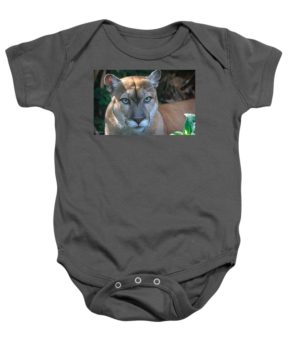 Florida Baby Onesie featuring the photograph Babcock Wilderness Ranch - Oceola The Panther Pleasantly Peering by Ronald Reid