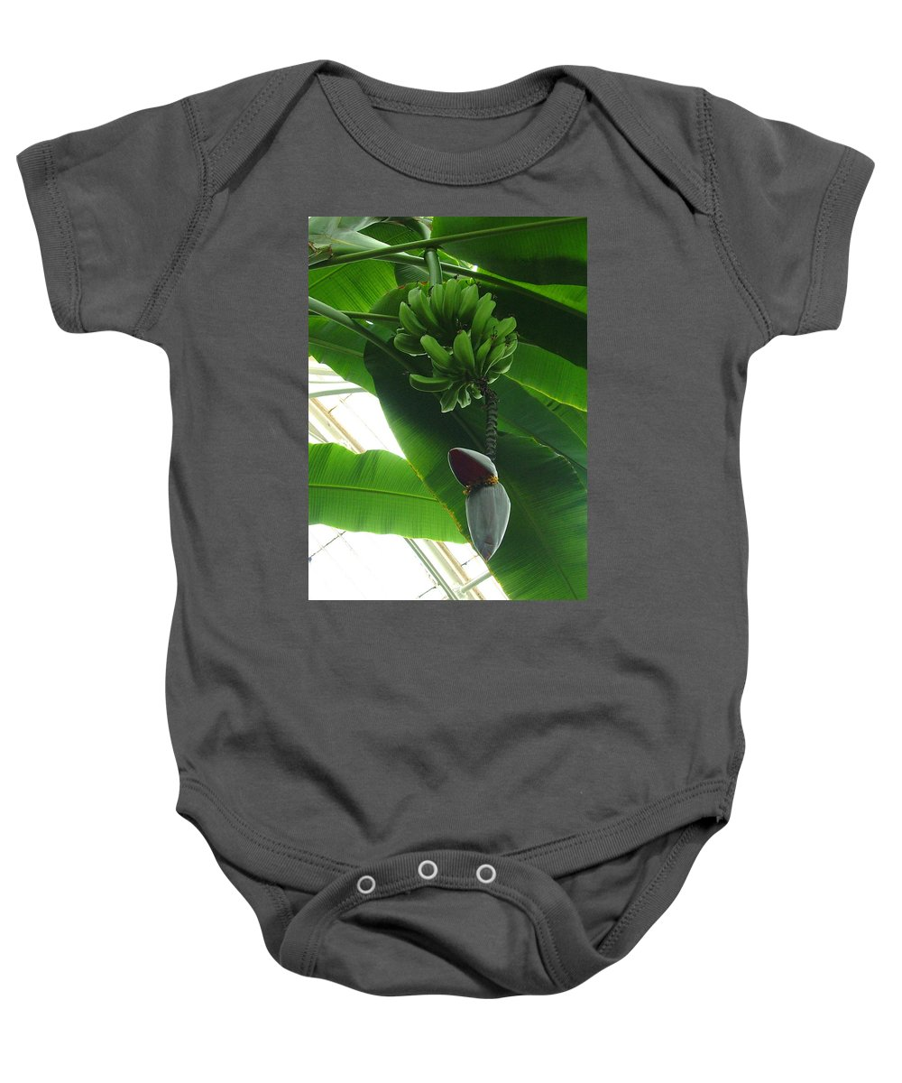 Kew Baby Onesie featuring the photograph Banana Plant Kew London England by Heather Lennox