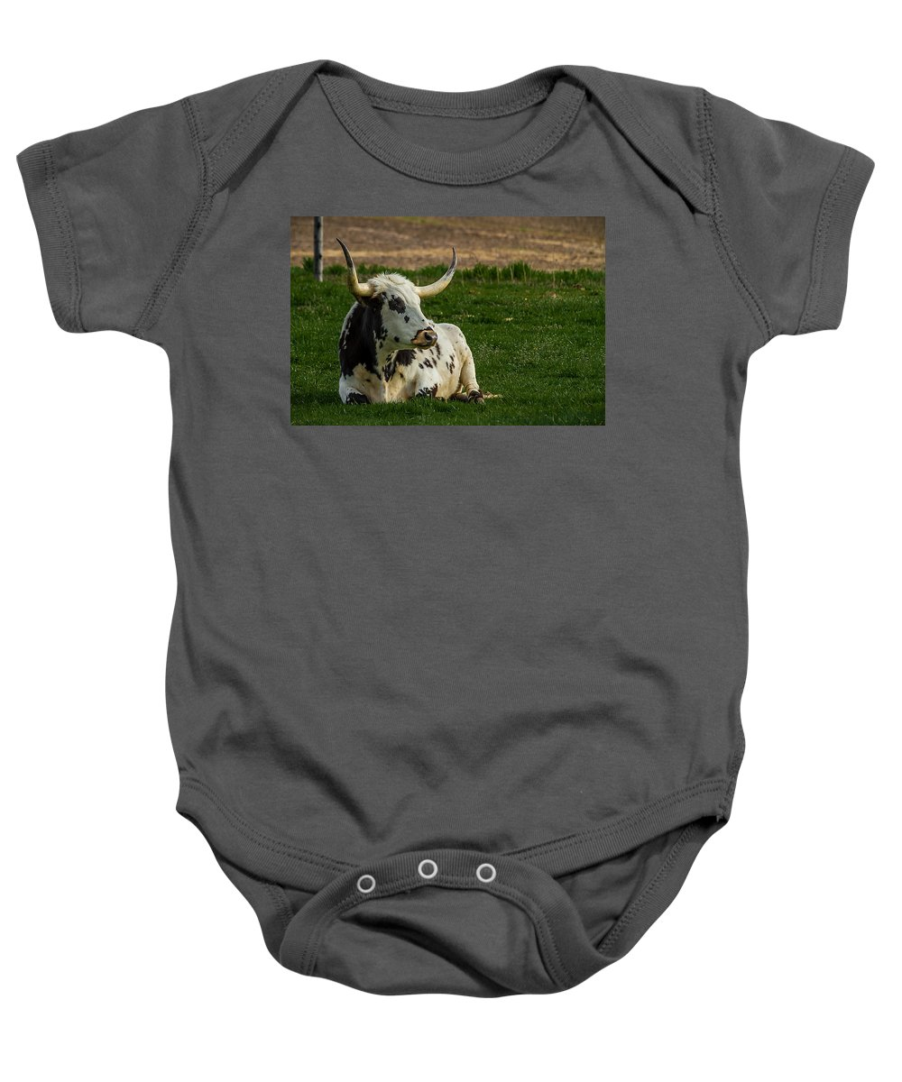 Bovine Baby Onesie featuring the photograph Basking In The Sun by Ron Pate