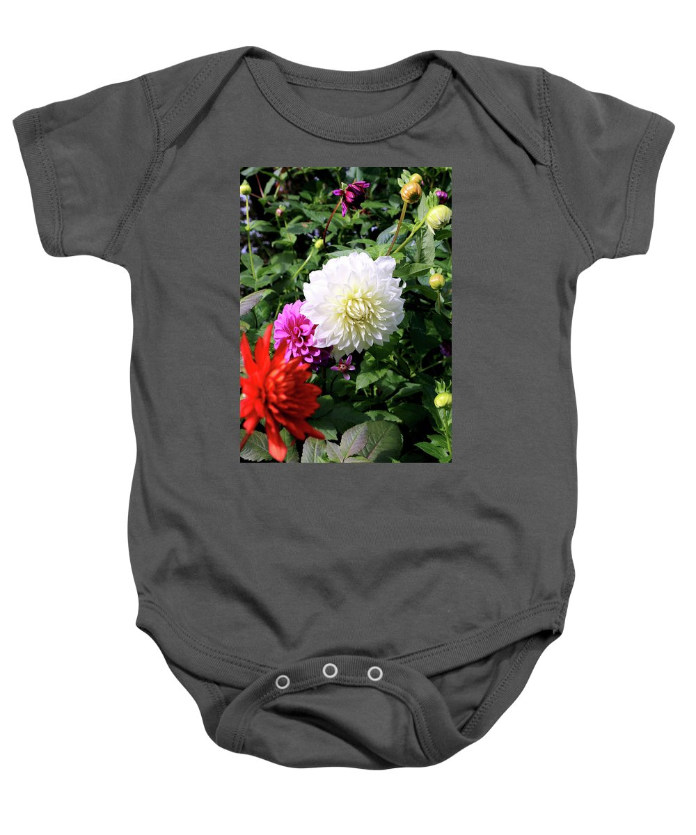 Outdoor Baby Onesie featuring the photograph Beautiful And Fresh Dahlias In The Butchrt Gardens,vancouver Island 1. by Andrew Kim