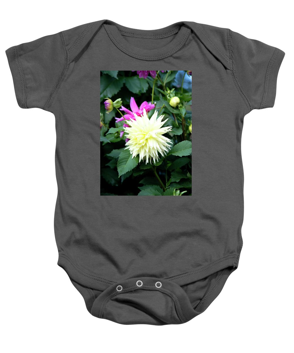 Outdoor Baby Onesie featuring the photograph Beautiful And Fresh Dahlias In The Butchrt Gardens,vancouver Island 2. by Andrew Kim