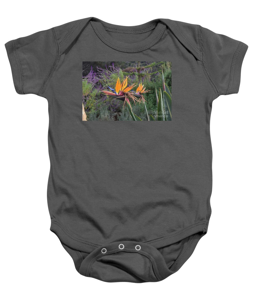 Bird-of-paradise Baby Onesie featuring the photograph Beautiful Bird Of Paradise Flower In Bloom by DejaVu Designs