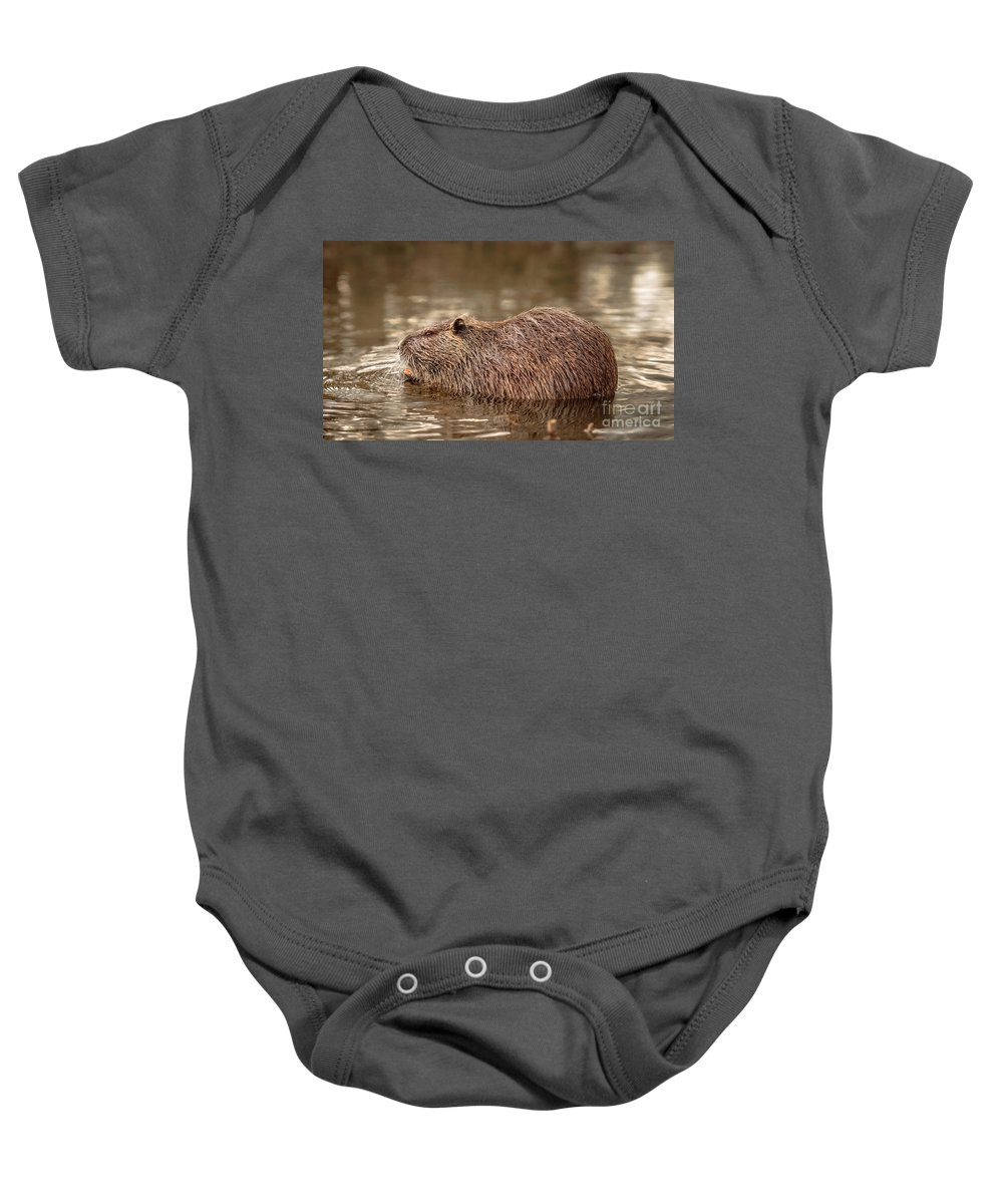 Water Baby Onesie featuring the photograph Beaver by Cristian M Vela