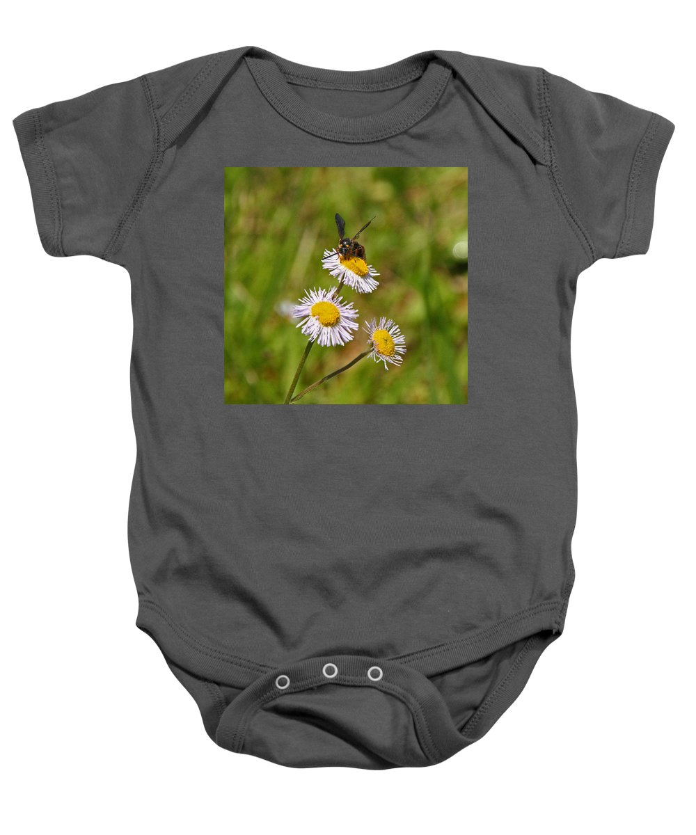 Insects Baby Onesie featuring the photograph Bee On Flower by David Campbell