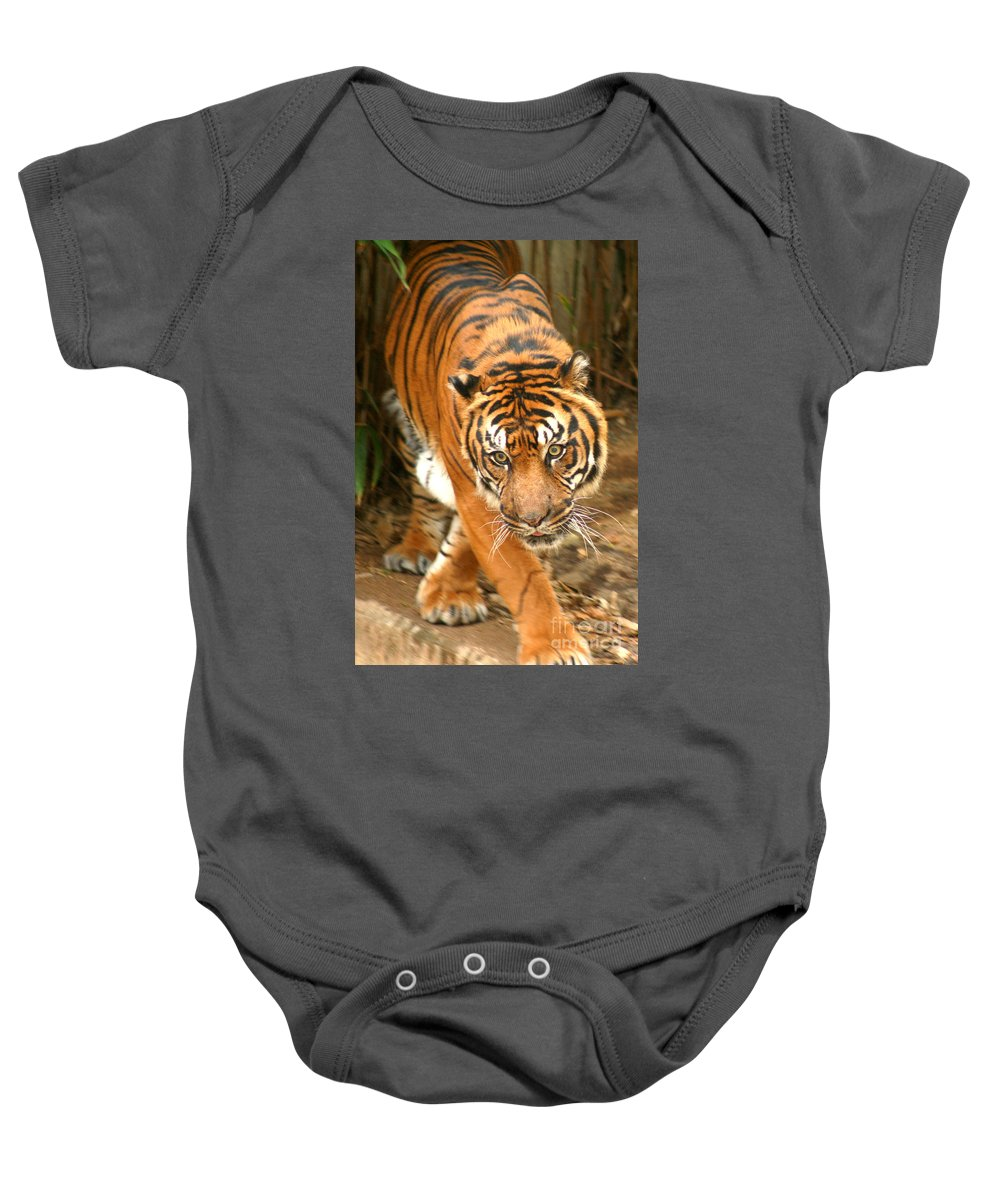 Bengal Baby Onesie featuring the photograph Bengal Tiger by Thomas Marchessault