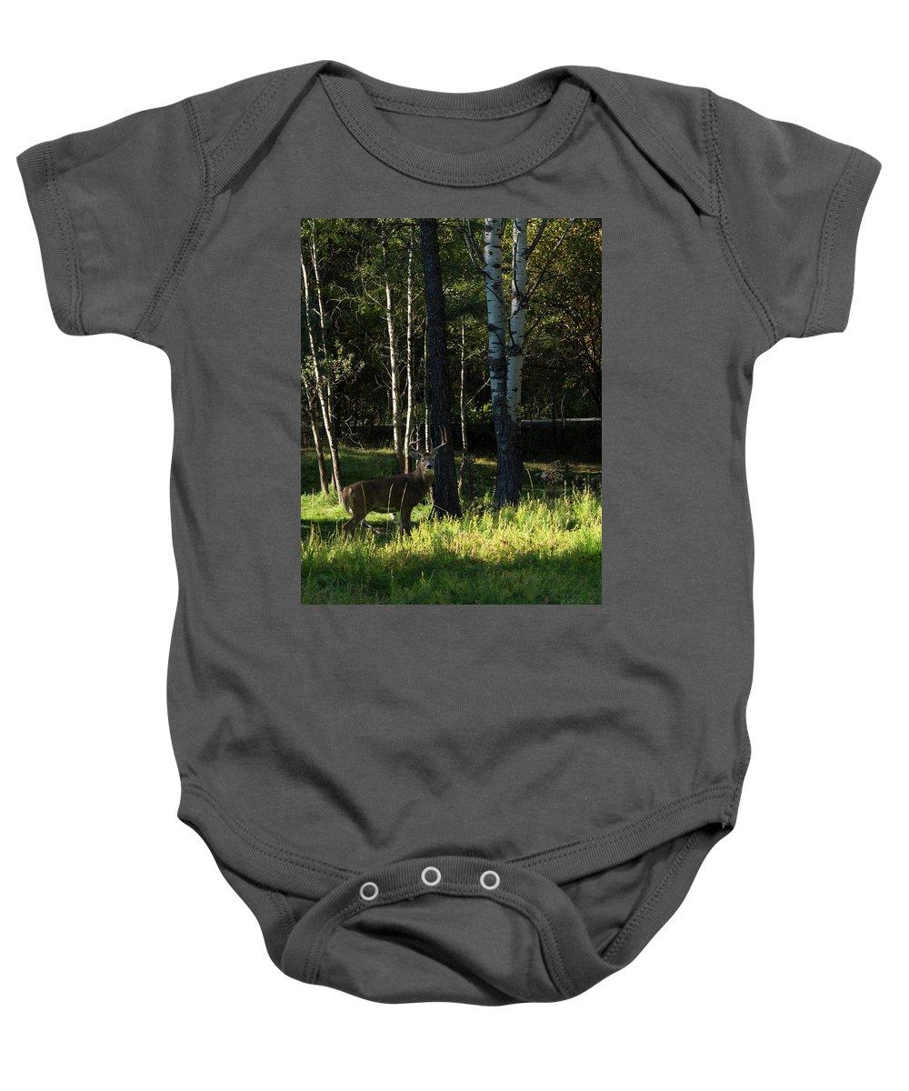Deer Baby Onesie featuring the photograph Big Buck by Roy Nierdieck