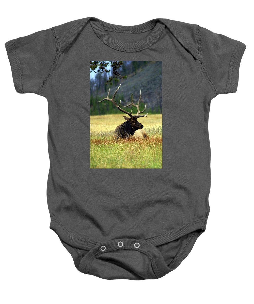Baby Onesie featuring the photograph Big Bull 2 by Marty Koch