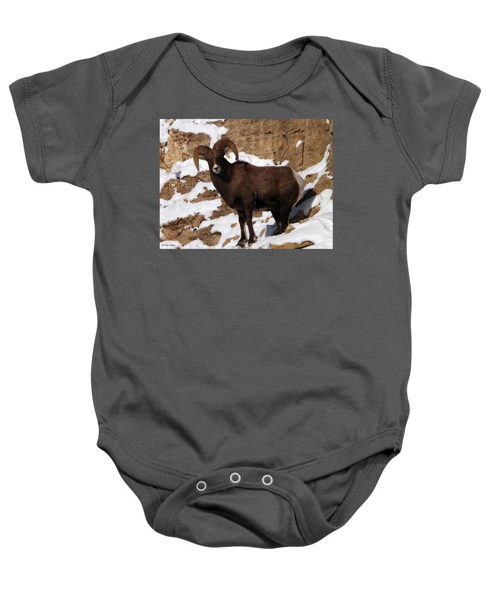 Bighorn Baby Onesie featuring the photograph Bighorn by Norman Vedder