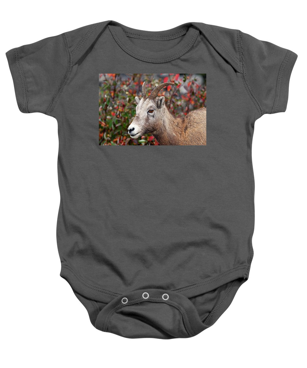 Jasper National Park Baby Onesie featuring the photograph Bighorn Sheep by Larry Ricker