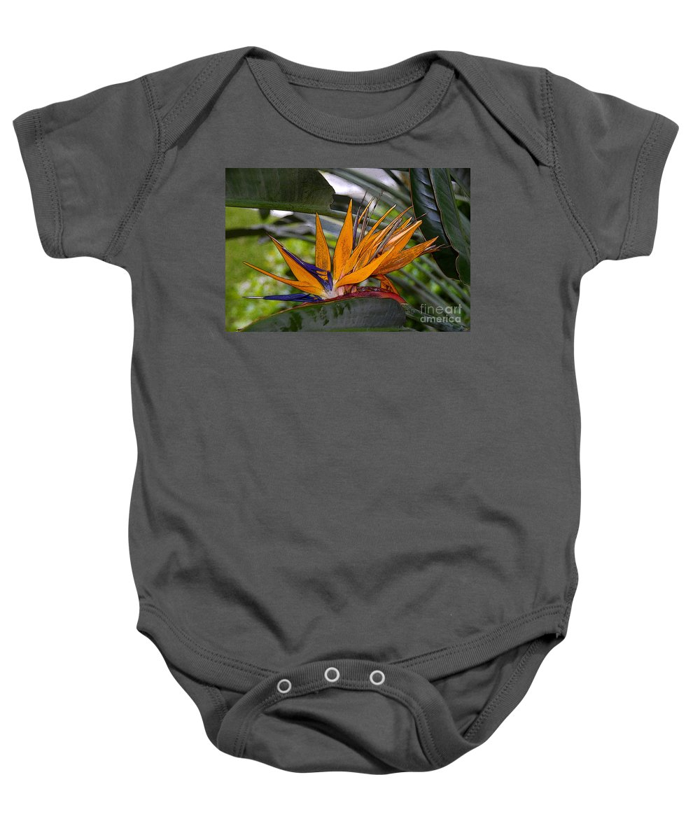 Art Baby Onesie featuring the painting Bird Of Paradise Work Number Three by David Lee Thompson