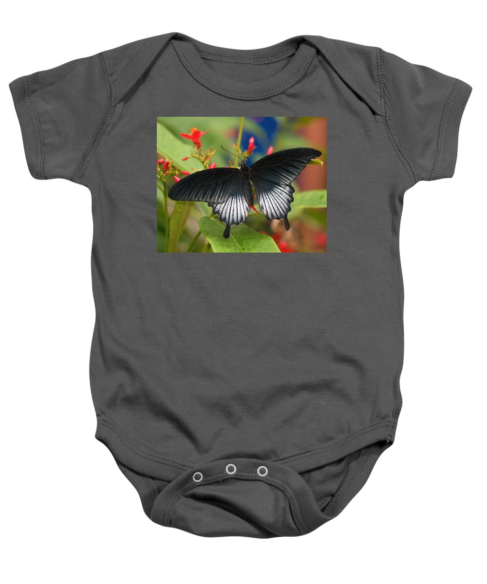 Butterfly Baby Onesie featuring the photograph Black Beauty by Gaby Swanson